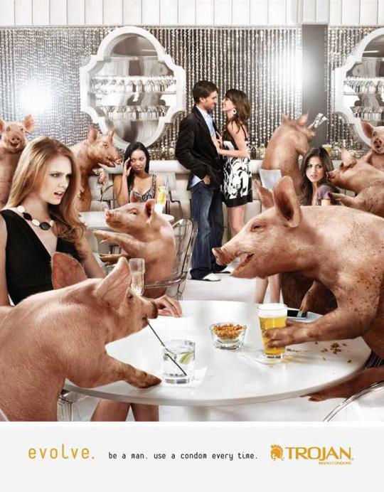 trojan-pigs