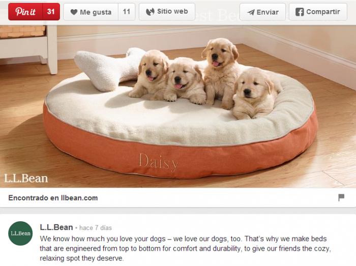 ¿Cómo sobresalir realmente en Pinterest?