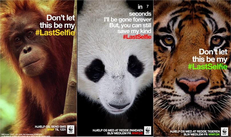 inbound en Fundaciones. WWF last selfie.